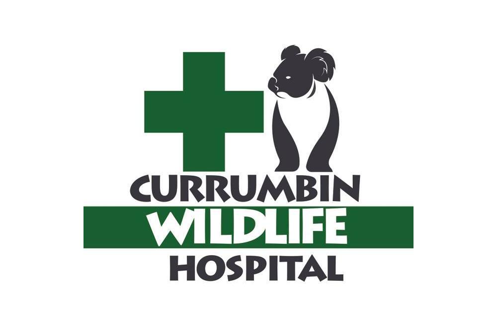 Currumbin-Wildlife-Hospital.png